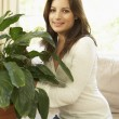 Woman At Home Looking After Houseplant - Stock Photo