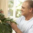 Senior Man At Home Looking After Houseplant — Stock Photo