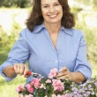 Senior Woman Gardening — Stock Photo #4823891
