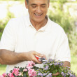 Senior MGardening — Stock Photo #4823901