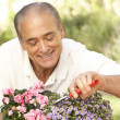 Royalty-Free Stock Photo: Senior Man Gardening