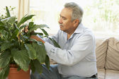 Senior man thuis op zoek na kamerplant — Stockfoto