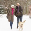 Senior Couple Walking Dog Through Snowy Woodland — Foto Stock