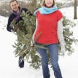 Senior Couple Carrying Christmas Tree In Snowy Landscape - Стоковая фотография