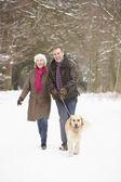 Cachorro ambulante do casal sênior através de bosque nevado — Fotografia Stock