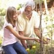 Teenage Granddaughter And Grandfather Relaxing In Garden — Stock Photo #4840193