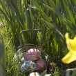 Easter Eggs Hidden In Daffodils For Egg Hunt — Stock Photo