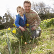 Stock Photo: Father And Son On Easter Egg Hunt In Daffodil Field