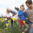 Family On Easter Egg Hunt In Daffodil Field — Stock Photo