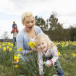 Family On Easter Egg Hunt In Daffodil Field — Stock fotografie