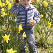 Stock Photo: Young Boy On Easter Egg Hunt In Daffodil Field