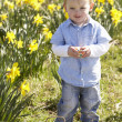 Young Boy On Easter Egg Hunt In Daffodil Field — Stock Photo