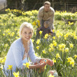 Woman Hiding Decorated Easter Eggs For Hunt Amongst Daffodils — Stock Photo