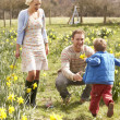 Young Family Walking Amongst Spring Daffodils — Stock Photo #4841856