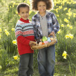 Two Boys Having Easter Egg Hunt In Daffodil Field — Stock Photo