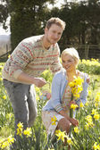 Romantic Couple Picking Spring Daffodils — Stock Photo