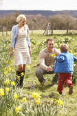 Young Family Walking Amongst Spring Daffodils — Stock Photo