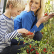 Young woman with teenager harvesting tomatoes — Stock Photo #5183940