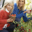 Young woman with child harvesting tomatoes — Stock Photo #5189727