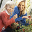 Young woman with child harvesting tomatoes — Stock Photo #5189741