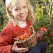 Young child harvesting tomatoes — Stok Fotoğraf #5189774