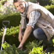 Young man working in garden - Photo