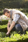 Young man working in garden — Stok fotoğraf