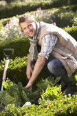 Young man working in garden — Stockfoto