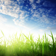 Grass and sunset — Stock Photo #4486935
