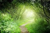 путь в глубоком лесу — Стоковое фото