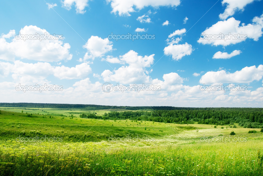 Summer sunny day and field of flowers — Stock Photo #4486919
