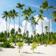 Palms in Dominican — Stock Photo #4492108