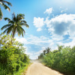 Ground road in jungle. Dominican republic — Stock Photo