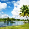 Royalty-Free Stock Photo: Palms and tropical lake