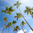 Palms and blue sky - Stock Photo