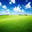Stock Photo: Green field and blue sky
