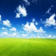 Field of grass — Stock Photo #4492212