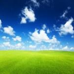campo de hierba — Foto de Stock