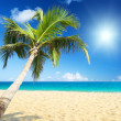 Stock Photo: Sea and coconut palm
