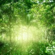 Sunlight in jungle of Dominican — Stock Photo