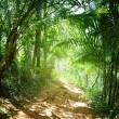Ground road in jungle of Dominican — Stock Photo #4492506