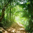 Ground road in jungle of Dominican — Stock Photo