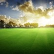 Trees on the field of grass and sunset — Stock Photo