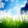 Grass and cloudy sky — Stock Photo #4492630