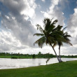 Palms and tropical lake — Stock Photo