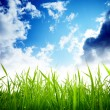 Grass and cloudy sky - Stock Photo
