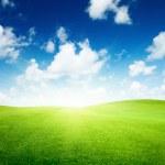 campo de grama verde e céu azul — Foto Stock
