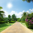 Road in tropical garden — ストック写真