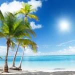 Caribbean sea and coconut palms — Stock Photo #4492864
