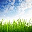 Grass and cloudy sky — Stock Photo #4492872